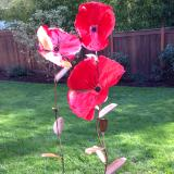 Giant Poppies