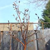 14 Foot Steel Tree Garden Renovation